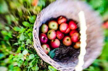 Jablečný dokument